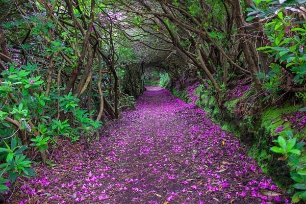 En Güzel 20 Yürüyüş Yolu