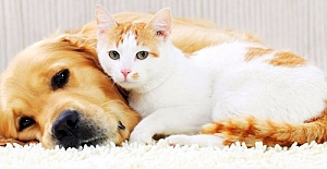 5199 Sayılı Hayvanları Koruma Kanununda Değişiklik Yapılmasına İlişkin Kanun Teklifi