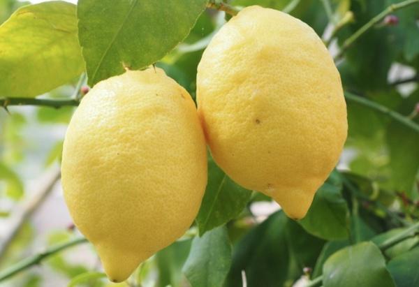 Limon İle Uyumanın Faydaları