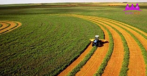 Normalleşme Sürecinde Gıda Tarım ve Orman