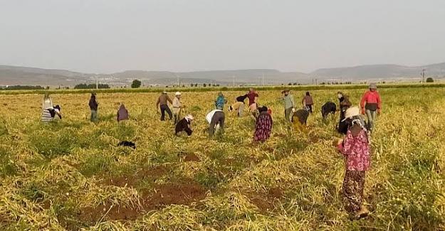 Mevsimlik Tarım İşçileriyle İlgili Çeşitli Verilere İlişkin Soru Önergesi (2 Nisan 2021)
