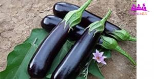 Patlıcan'dan Pratik Tarifler