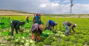 Mevsimlik Tarım İşçilerinin SGK Kapsamına Alınması Talebine İlişkin Soru Önergesi