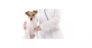 Veteriner Hekim Atamalarına İlişkin Soru Önergesi