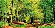 Orman Kanununda Değişiklik Yapılmasına İlişkin Kanun Teklifi